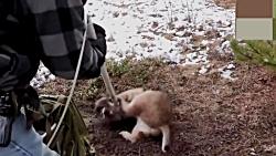 نجات حیوانات وحشی مختل...