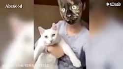 دعوای دو گربه کشتی کج گربه ها