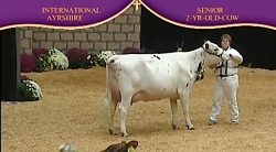 International Ayrshire Show 2010 , 2 Years...