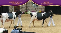 International Holstein Show 2010 , 2 Years...