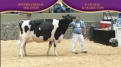 International Holstein Show 2010 , 6 Years...