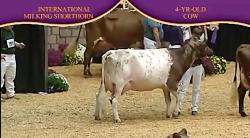 International Dairy Shorthorn Show 2010 , ...