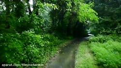 قدم زدن زیر باران در جنگل های شمال