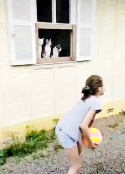 تماشاچی های این بازی از خود بازی جذاب ترند (گربه های بامزه)