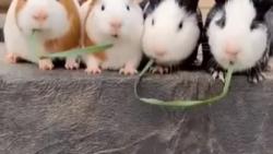 کلیپ جذاب حیوانات - 2
