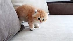 بامزه ترین گربه