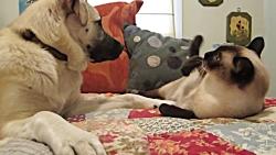 درگیری جالب گربه با سگ