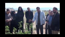 کارگاه آموزشی میدانی کشت گل محمدی توسط دکتر رستگار