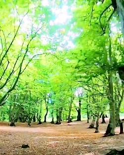 طبیعت زیبای مازندران _ ...
