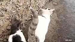 دو گربه از زیرزمین و یک گربه سیاه