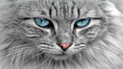 دو گربه غذا می خواهند و گربه سیاه گرسنه نیست