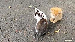 بچه گربه ها زیر دال بتونی زندگی می کنند