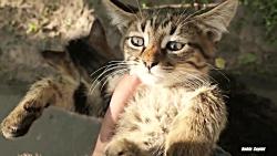 3 بچه گربه روی نیمکت غذا می خورند