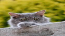 بچه گربه خاکستری غرق در اسباب بازی