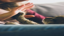 6 بچه گربه جدید با مادر
