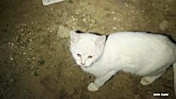 بچه گربه ها هنوز در زیرزمین زندگی می کنند