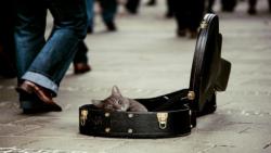 پنج گربه نه تنها منتظر من هستند