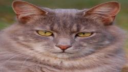 گربه کرکی جدید در خیابان