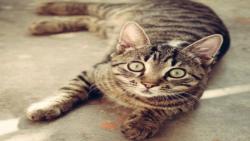 بچه گربه ها در یک آپارتمان اجاره ای