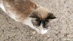 گربه زیبا از یک سگ ولگرد می ترسد