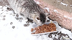گربه ها و دو سگ ولگرد گرسنه