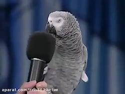 باهوش ترین طوطی دنیا
