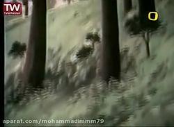 کارتون زیبای (ایکیوسان مرد کوچک)_روباه و جستجوی گنج.