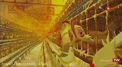 انیمیشن سینمایی زیبای مرغ زیرک