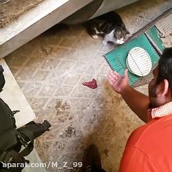 گربه معاشرتی