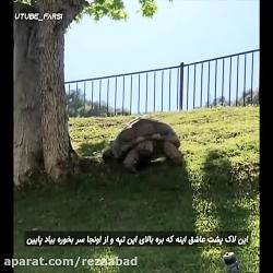 کلیپ جالب - لاکپشتی که عاشق سر خوردنه