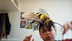 زنبور غول پیکر