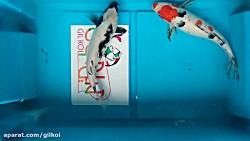پک پیشنهادی شماره ۶ ماهی کوی