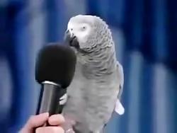 سخن گفتن طوطی