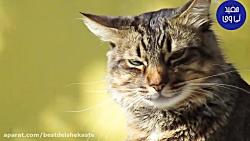 اگر گربه ای شب به شما نزدیک شود چه معنی میدهد؟