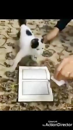 فیلم رد نشدن گربه از قرآن