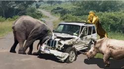 حمله حیوانات به اتومبی...