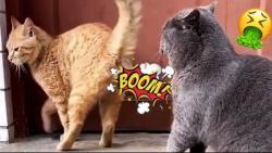 گربه های خنده دار - کلیپ...