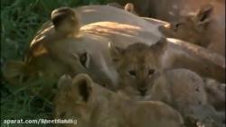 مستند حیات وحش آفریقا.ش...