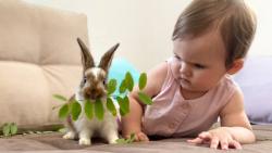 بازی دختر کوچولو و خرگوش