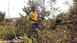 ساخت تله برای طوطی