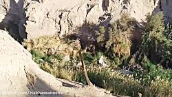هخامنش سعیدی