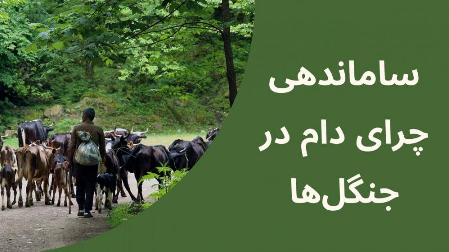 ساماندهی چرای دام در جنگلها