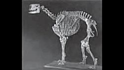 10 تا از بزرگ ترین جانوران تاریخ