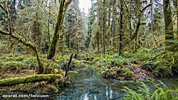 سه ساعت ویدیو از جنگل بارانی زیبا و بکر   (ریلکسیشن در طبیعت 142)