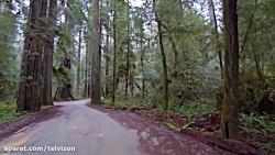 سه ساعت ویدیو از پیاده روی در جنگلهای کشور کانادا   (ریلکسیشن در طبیعت 143)
