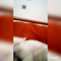 یه ویدیو از آقای لعو گربم