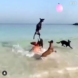 سگهاي ديدني و ترسناك