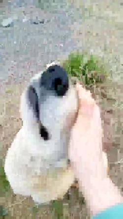 عجب سگه نازی من دارم تیدا خانوم