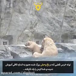 به آب زدن سریع خرس مادر برای نجات فرزندش