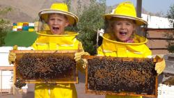دیاناشو - دیانا و روما و زنبور عسل - سفرخانوادگی سرگرم کننده